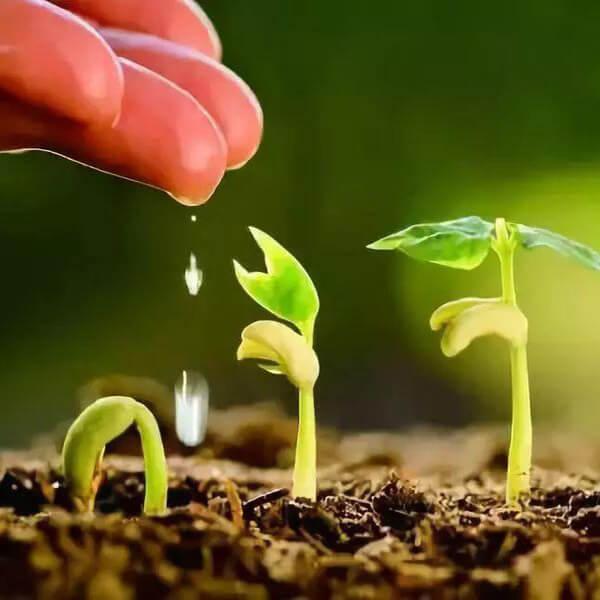 soil fertility